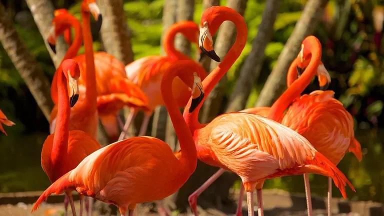 Flamingo-Gardens-1