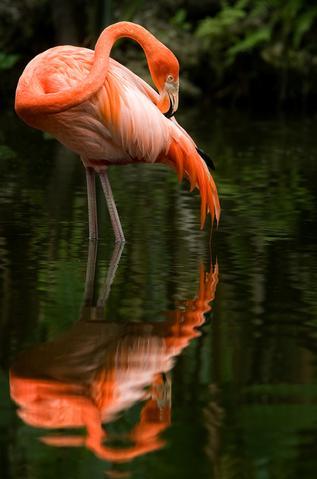 Flamingo-Gardens-4