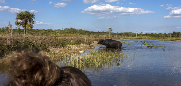 Sortie Billie Swamp Safari avec Richard